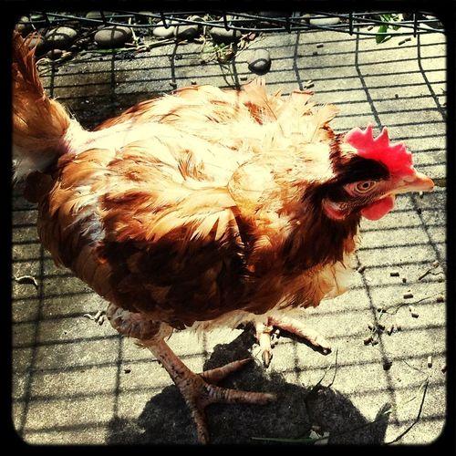 Elsie Tanner, a stunning old bird.