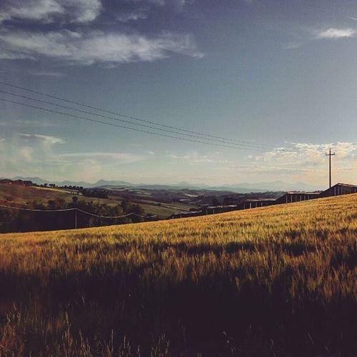 che ne sai tu di un campo di grano? Campo Grano Campodigrano Marche Marcheforyou Landscape Sky Lategram Collinemarchigiane Paesaggio Paysage Sunlight Sun Wheat Field Wheatfield Naturelovers Nature