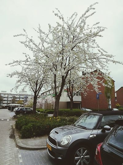 Just a picture from a street. Car Transportation Land Vehicle Mode Of Transport Tree Stationary No People Outdoors Day Sky Flower Blossoming Tree Blossom Tree Blossom Time🌺 The Way Forward HuaweiP9Photography Made By Noesie Houses Cars Parking Place