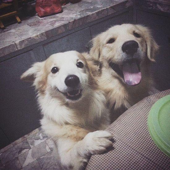 แวะมาขอหนมกินก่อนนอนฮะ ??? Dog Pet Pet13 Goldenretriever