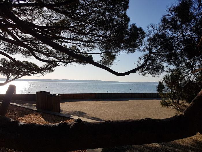 Tree Sky Sea