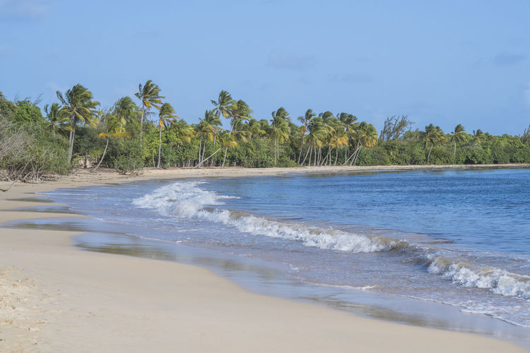 Grande Anse des Salines, Martinique Land Wave Beach Beauty In Nature Caribbean Day Island Landscape Nature Outdoors Sand Scenics - Nature Sky Tranquil Scene Tranquility Tropical Climate Water