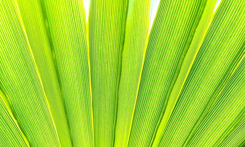 Tropical Plant Abstract: Nature's Design Tropical Plant Closeup Abstract Green Leaves Tropical Plants Nature_collection Natures Textures Natures Design Background Texture Bright Vivid Tropical Beauty Pattern Beauty In Nature Nature's Green Detail Tropical Plant Abstract Nature