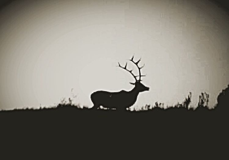 Wildlife Theodore Roosevelt National Park Badlands North Dakota Badlands North Dakota Black And White Photography Silouette Photography Elk