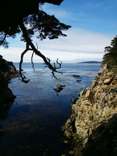 Coast Big Sur CALIFORNIA Point Lobos Nature