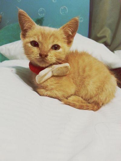 My Bby♥ Forever&ever Kittylove