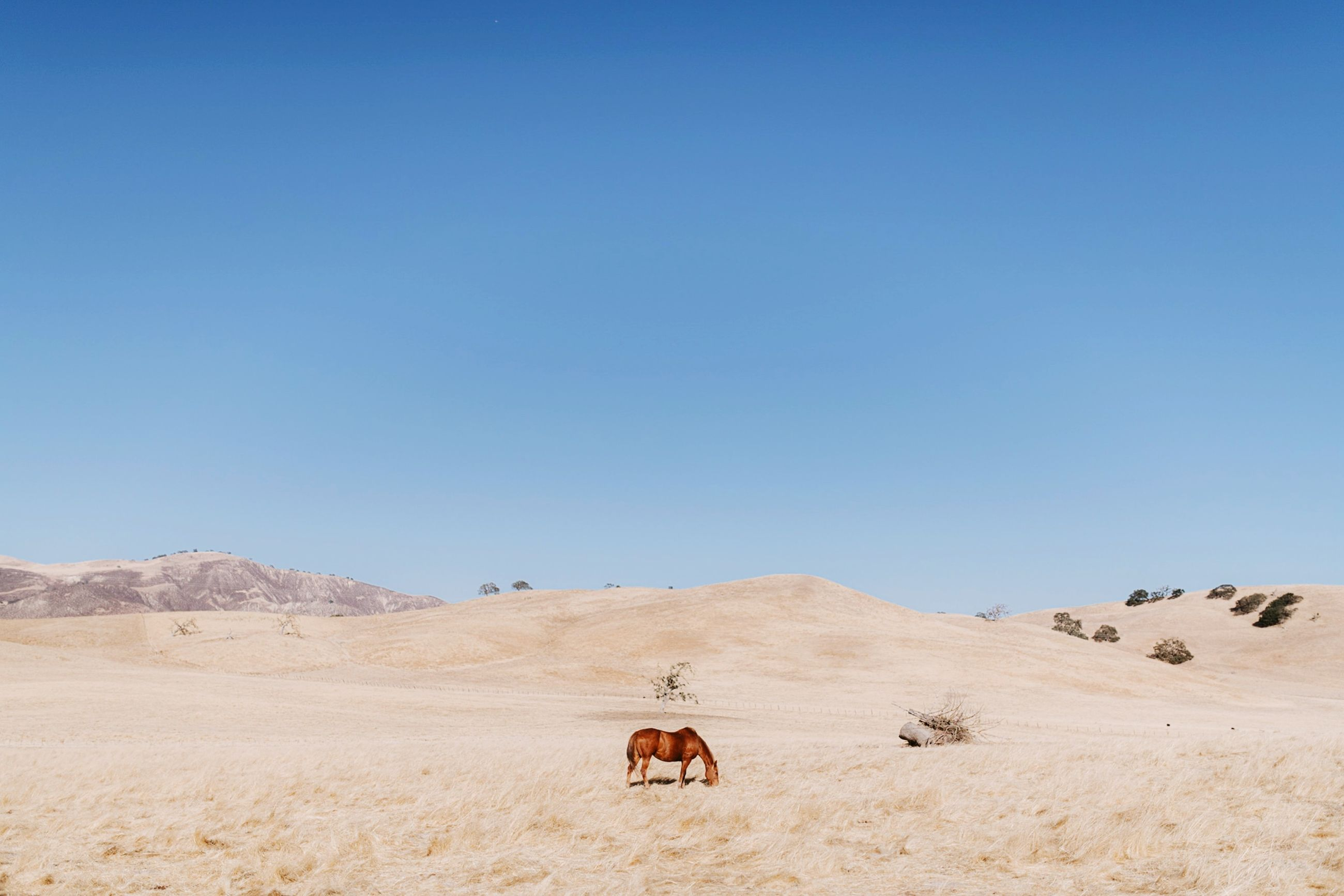 landscape, mammal, animal, animal themes, land, environment, sky, desert, clear sky, domestic animals, scenics - nature, copy space, nature, vertebrate, domestic, livestock, day, animal wildlife, pets, beauty in nature, no people, herbivorous, arid climate, outdoors, climate
