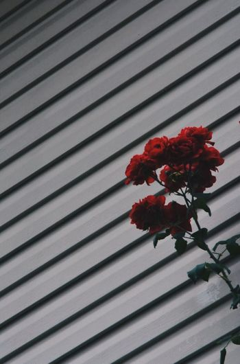 Stripes Flower