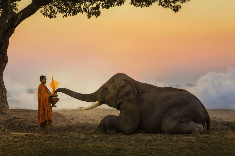 Monk with elephant standing on field against sky during sunset