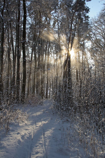 Sunlight streaming through trees on snow covered field