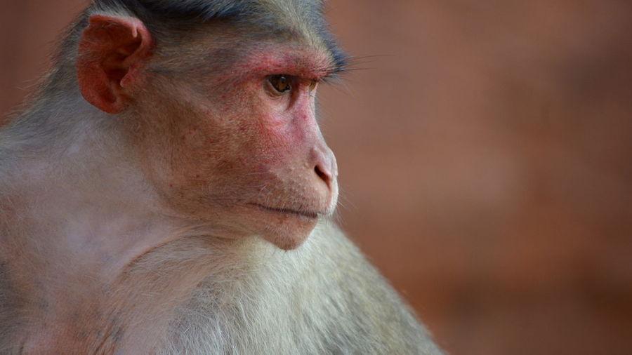 Attitude Monkey