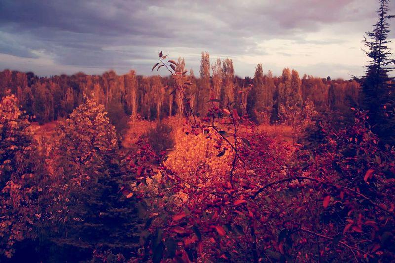 Müthiş haftasonu, huzuru içime çekiyorum Dogaileicice Orman Temizhava Goodday Forest OpenEdit First Eyeem Photo Landscape Müthiş Popular Photos
