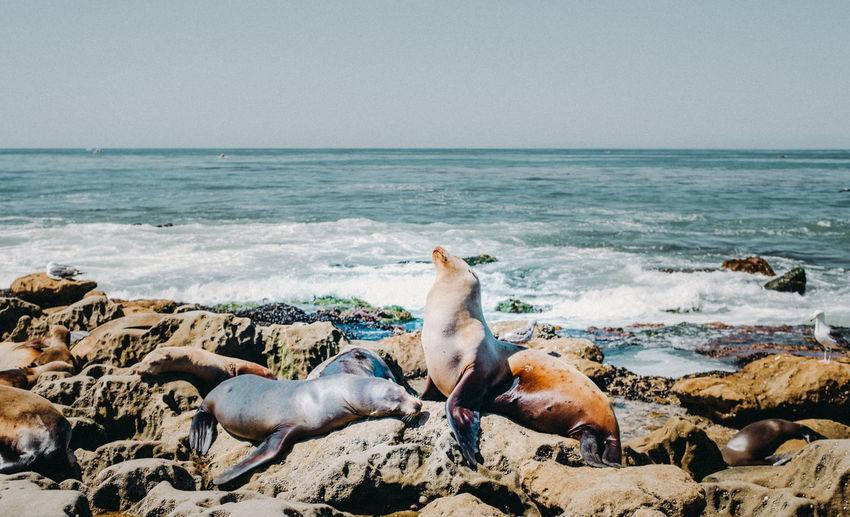 Animal Posing Animals In The Wild Nature Nature Photography San Diego Sea Lion Seascape Photography Summer Exploratorium Animal Animal Wildlife Animal Wildlife Outdoors Day Animals Ocean Sea Sea Lion Natural Habitat Seal - Animal Sealion  Seascape Selective Focus Sky
