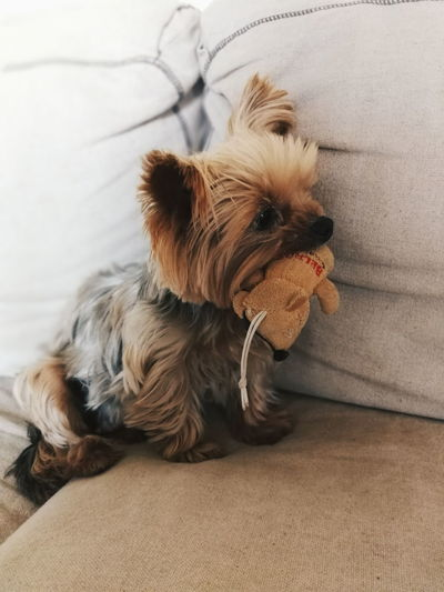 Dog Pets Domestic Animals One Animal Animal Themes Indoors  No People Mammal Sitting Day Close-up