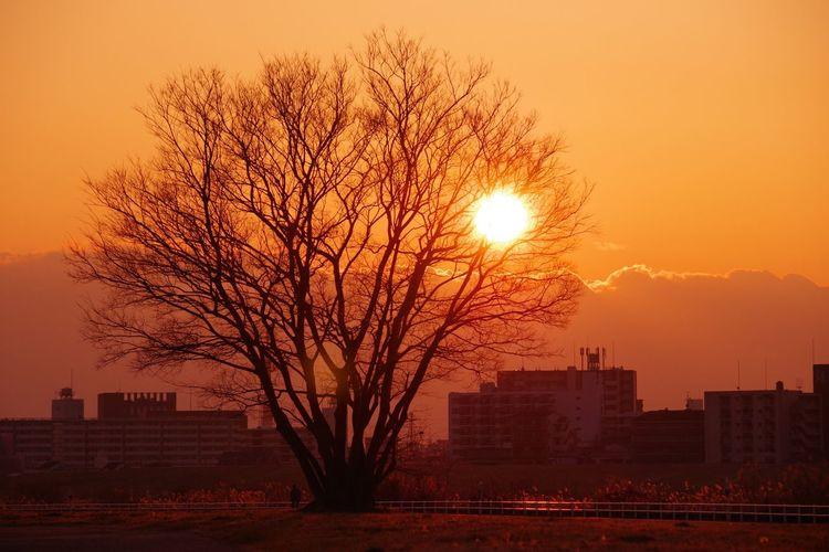 Sunset Tree 淀川
