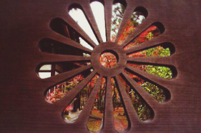 覗き見(´艸`)この中とても綺麗だった Autumn🍁🍁🍁 公園 紅葉 秋