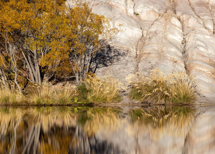 Water Reflection Tree Plant Beauty In Nature Lake Nature Tranquility Scenics - Nature No People Waterfront Day Autumn Tranquil Scene Outdoors Rock Land Non-urban Scene Autumn Collection Pampas Grass