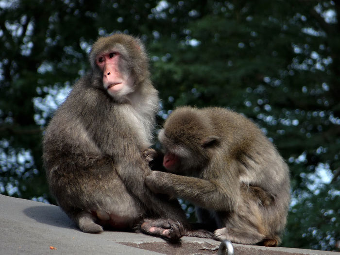 Who Are You ? Animal Family Animal Themes Animal Wildlife Animals In The Wild Couple - Relationship Day Focus On Foreground Infant Japanese Macaque Mammal Monkey Nature Outdoors Searching Sitting Taking Care Togetherness Two Animals Young Animal