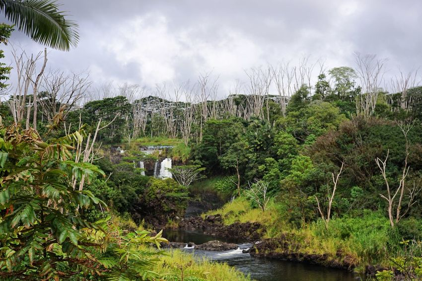 Tree Nature Sky No People Outdoors Water Cloud - Sky Beauty In Nature Scenics Day Hawaii Landscape Landscape_photography Big Island Waterfall Green