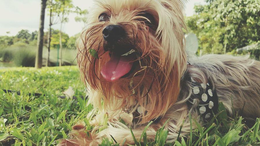And eat it 😲😲Happy Time Grass Green Lovely Cute Ocha Taste Good