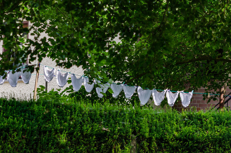 Beauty In Nature Day Fragility Freshness Green Color Growth Hanging Hot Pants Hotpants In A Row Nature Nature Nature Photography Nature_collection No People Outdoors Pants Plant Tree Underwear😈