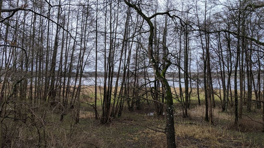 Somewhere in Schleswig-Holstein. Schleswig-Holstein Germany Trees Lake Winter Water Bare Tree Bare Trees Bare Trees In Winter Simplicity Symmetry Beauty In Nature Beauty Colors Tree Branch Forest Sky