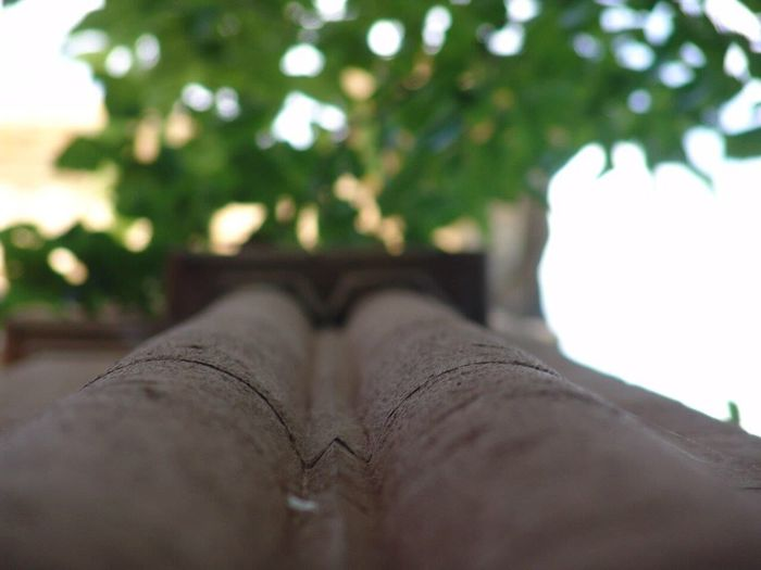 One Person Human Body Part Plant Personal Perspective Tree Low Section Nature Selective Focus Body Part Human Leg Close-up Real People Unrecognizable Person Day Outdoors Lifestyles Human Foot Shoe Growth Human Limb