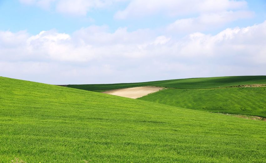 a tribute to windows Green Color Field Growth Environment Landscape Agriculture Sky Land Cloud - Sky Beauty In Nature Farm No People