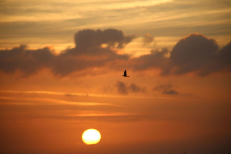 Silhouette bird flying in sky during sunset