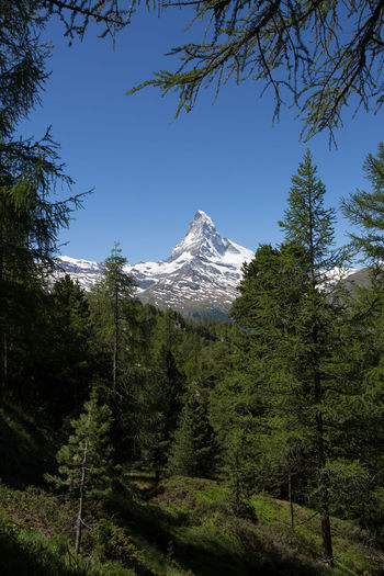 The Matterhorn, Zermatt, Switzerland framed by pine trees. Matterhorn Zermatt Beauty In Nature Cold Temperature Coniferous Tree Day Environment Forest Green Color Growth Land Landscape Mountain Mountain Peak Nature No People Outdoors Pine Tree Plant Scenics - Nature Sky Snowcapped Mountain Summer Tranquil Scene Tranquility Tree