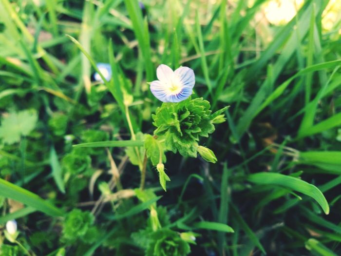 Flower Nature Growth Green Color Beauty In Nature Freshness No People Close-up Flower Head Day Outdoors Purple Leaf EyEmNewHere EyeEm Nature Lover Plant Spring Flowers Springtime Spring Has Arrived