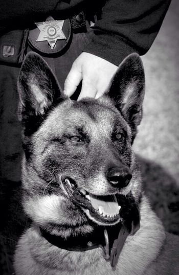 Deputy Ozzy... R.I.P. Pets Black And White Police Blackandwhite Vintage