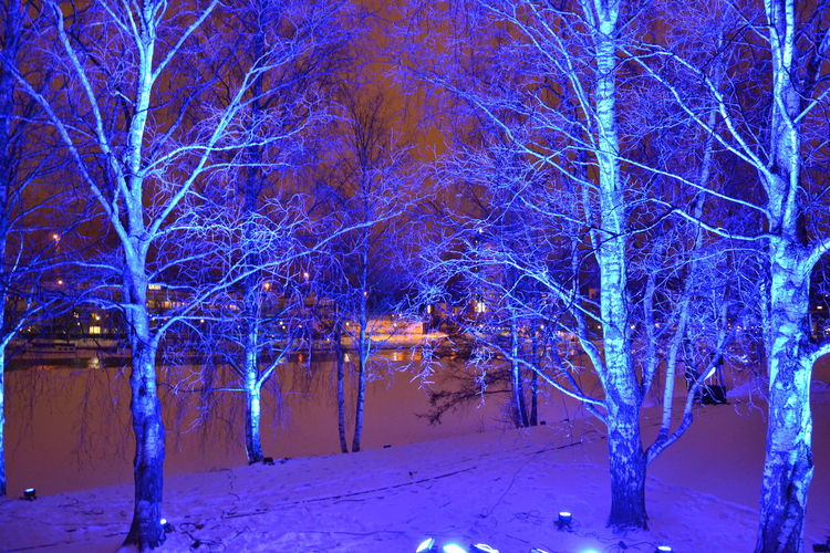 Light art in Joensuu Blue Cold Cold Temperature Color Light Colors Light Night Trees Winter