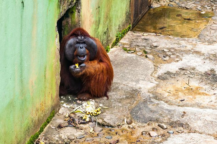 Monkey sitting on wall in zoo