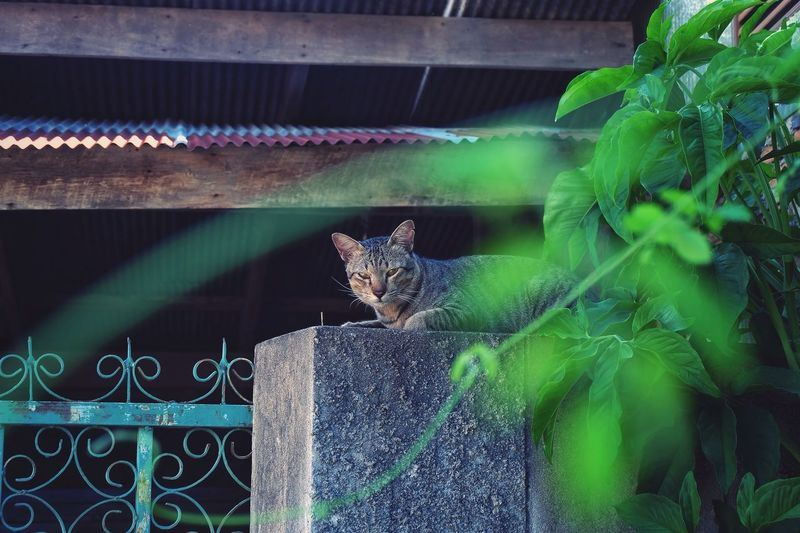 Cat Domestic Cat Cat One Animal Animal Themes Pets Domestic Animals Mammal Sitting Plant Selective Focus Stray Animal Whisker Green Color Zoology Vibrant Color Outdoors
