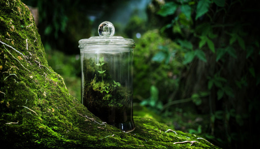 Green moss in glasshouse garden on rain forest fresh nature with collect nature in box