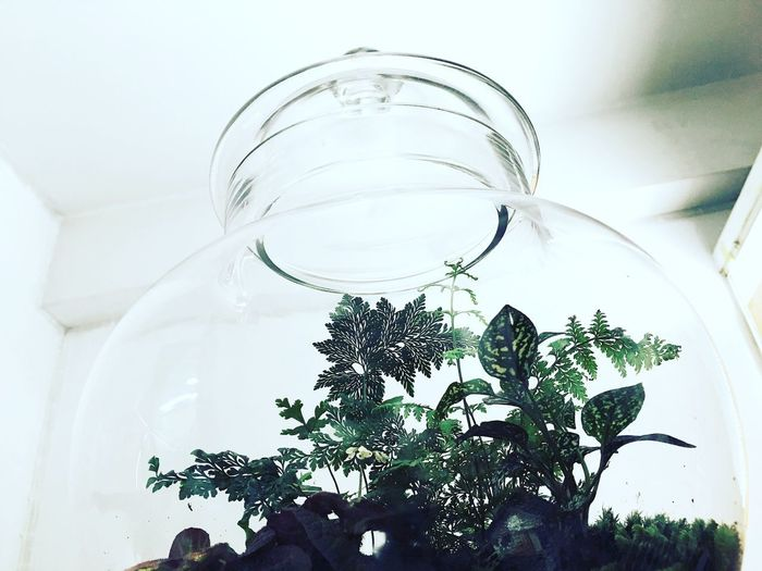 Plant Leaf No People Indoors  Growth Low Angle View Tree Close-up Nature Day Green Green Grass Of Home Terrarium🍀