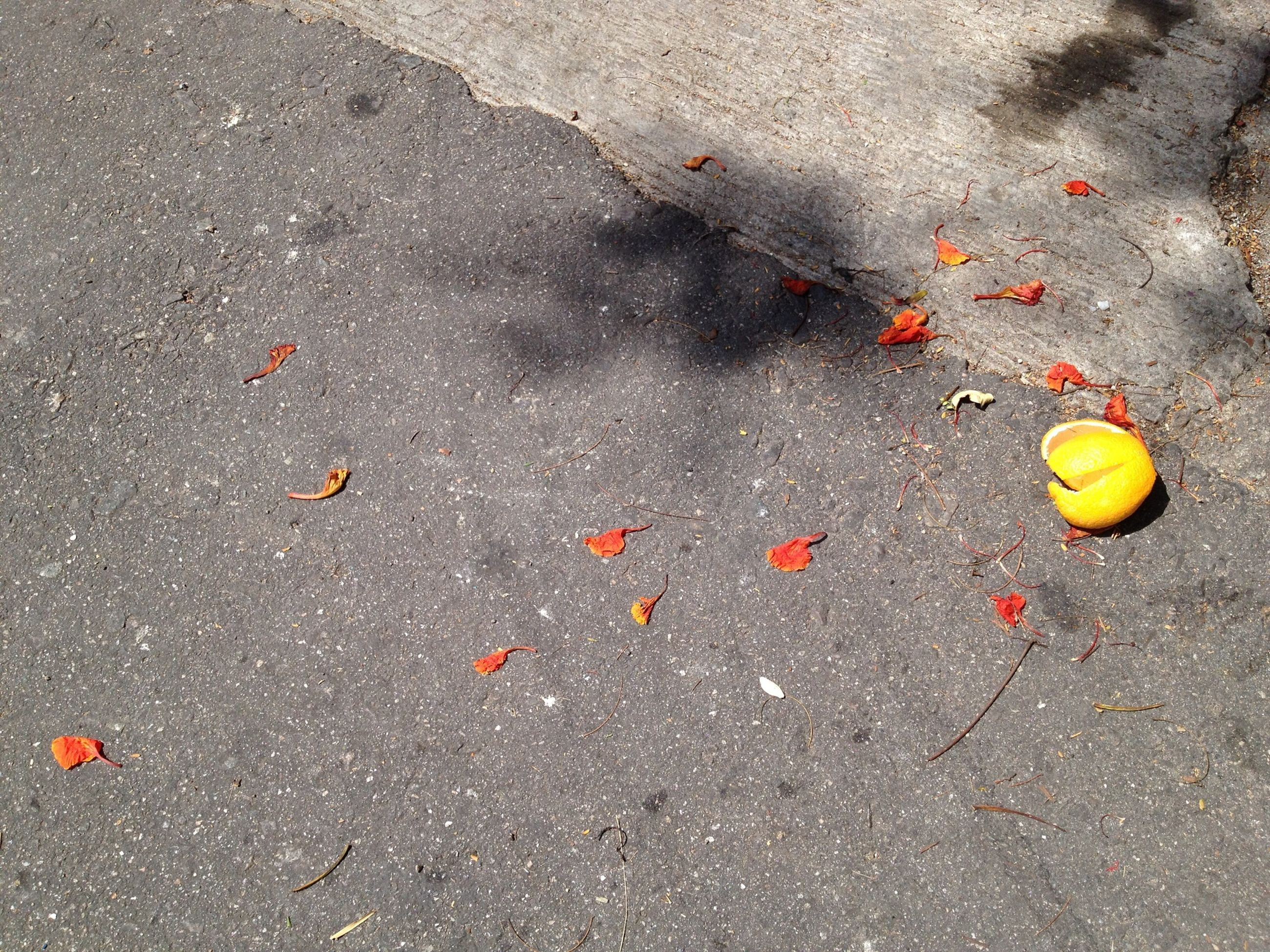 high angle view, street, asphalt, road, leaf, wet, ground, day, outdoors, autumn, fallen, red, directly above, puddle, sidewalk, no people, change, nature, elevated view, sand