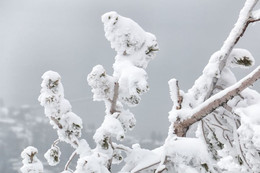 Winter Wonderland ❄ White Color Branches With Snow South Lake Tahoe Cold Temperature Beauty In Nature Heavenly Ski Resort Tranquil Scene Close-up Gray Skies