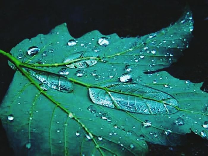 Drop Water Rain Nature Green Color RainDrop Beauty In Nature Outdoors Walking Photo Photography Nature Day Natural Beauty Nature Photography Czech Beauty Folowerstagram Beauty In Nature Weather
