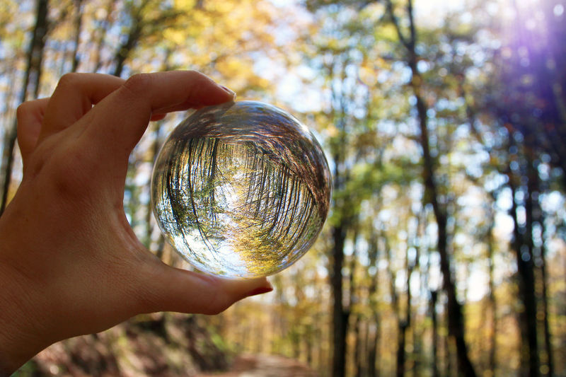 Cropped hand of person holding crystal ball against trees in forest