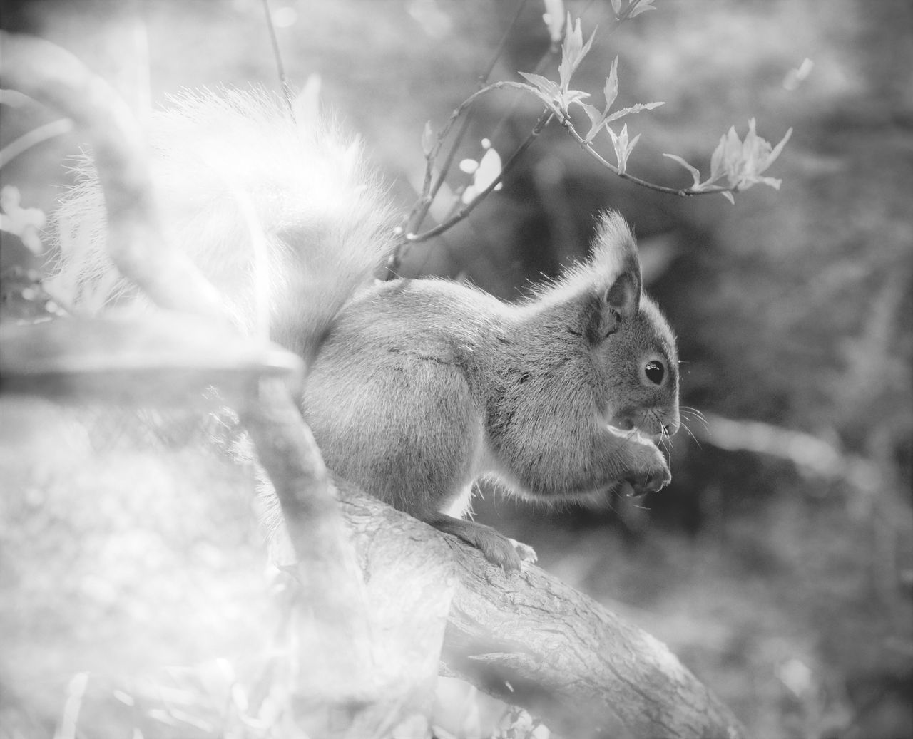 mammal, animal themes, one animal, animals in the wild, squirrel, no people, nature, animal wildlife, outdoors, day, close-up