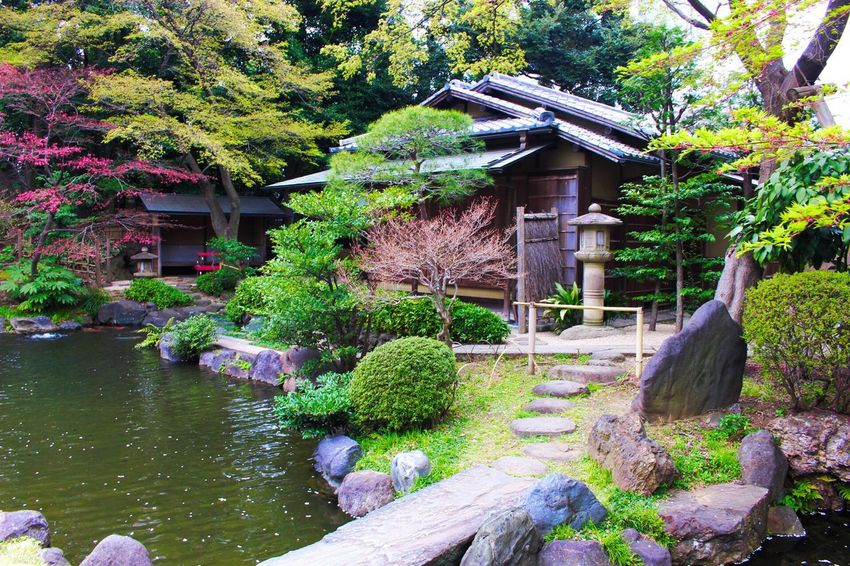 靖国神社 Hello World Taking Photos Flowers Flower Collection Garden Flower Shrine Shrine Of Japan Shrines & Temples