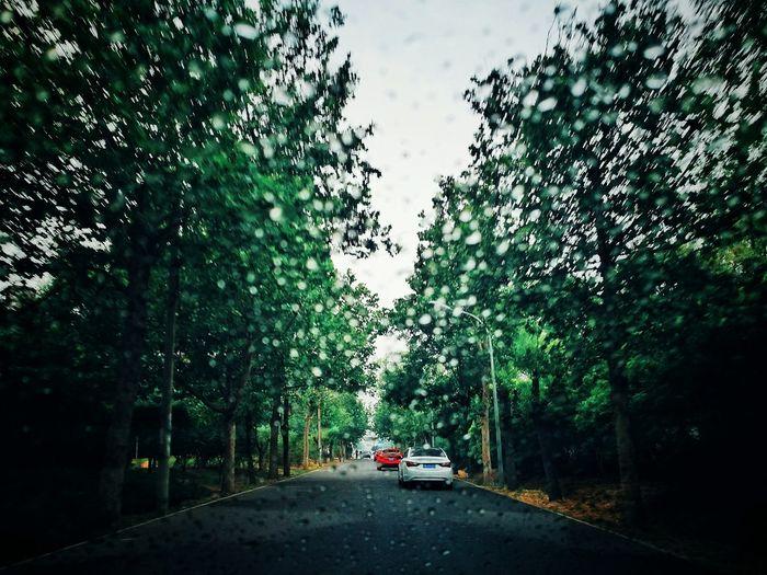Cold Days Rainy Days Raindrops Rain Drops On The Road Trees Path Car On The Road Raindrops On My Window Raindrops On My Windshield Raindrops💧 Raindrops Are Diamonds The Street Photographer - 2016 EyeEm Awards