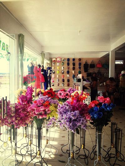 my store in lethem•﹏•