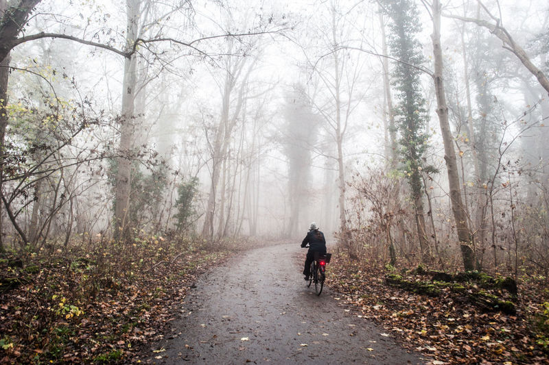 Rear View Of Person Cycling In Forest During Foggy Weather