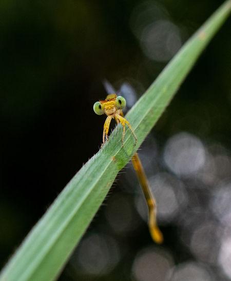Portrait of damselfly on green grass