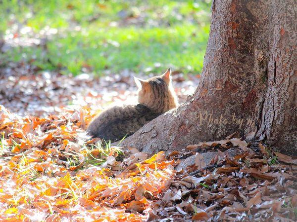 Cat Cat♡ Stray Cat 野良猫 猫 Animal Playing With The Animals キジトラ 哀愁 Cat Lovers