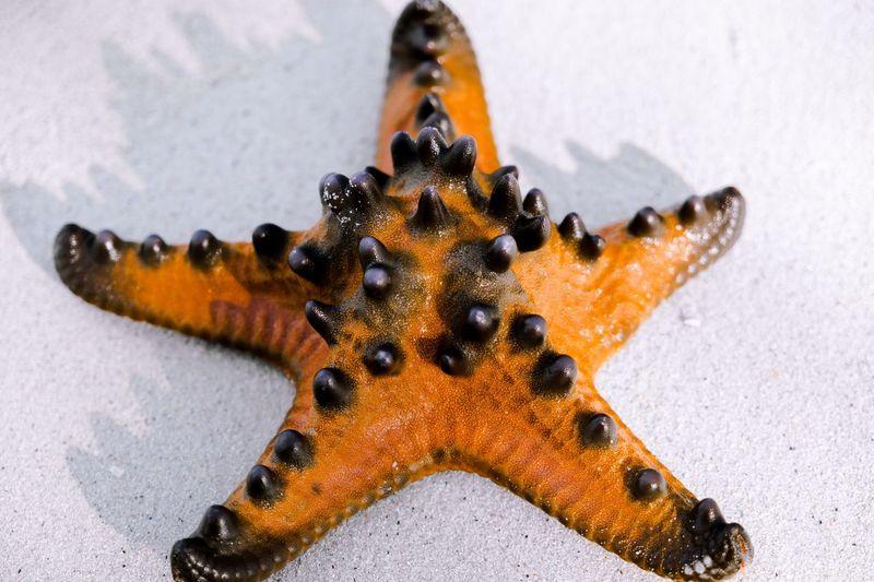 Starfish Star