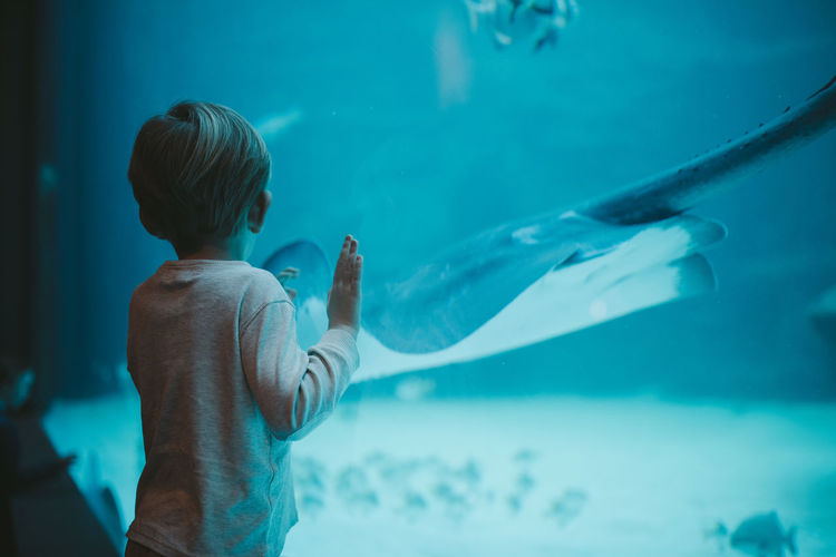 Rear View Of Boy Looking At Stingray In Aquarium